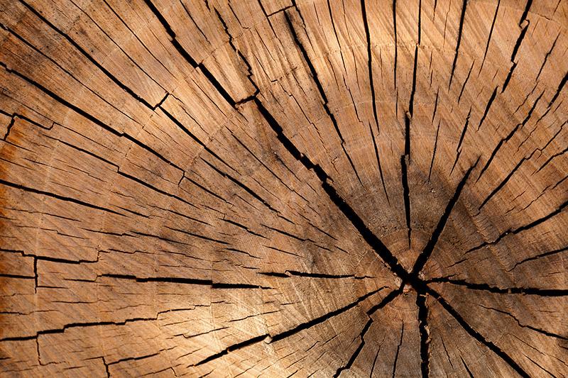 La fusta serà el formigó del segle XXI